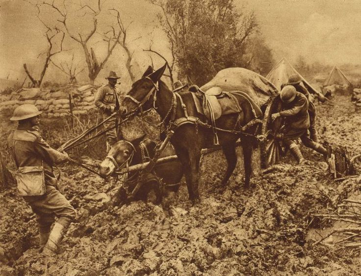 1914-18 British soldiers with a supply mule team sunk in mud
