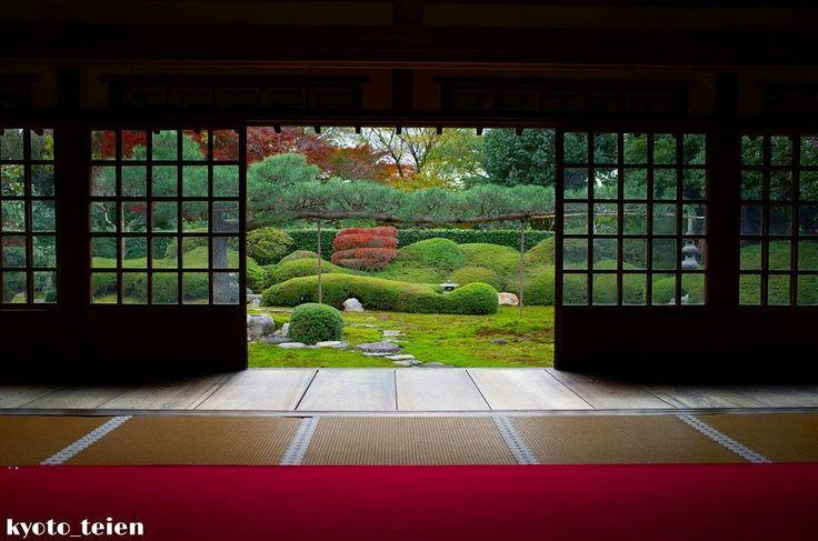 京都、一華院。 「依稀松の庭」 美しい苔庭にピヨーンと伸びる松と紅葉 特別拝観11月6日~11月30日 時間10時~16時受付終了 #一華院 #京都 #京都観光 #京都庭園 #日本庭園 #ファインダー越しの私の世界 #写真好きな人と繋がりたい #カメラ好きな人と繋がりたい #そうだ京都行こう #けしからん風景 #total_gardens #art_of_japan_ #loves_united_kyoto #super_japan_channel #kyoto #kyoto_teien #japan #team_jp_ #japanesegarden #photo_jpn #ricohgr #special_spot_ #loves_nippon #special_zipangu_ #world_besttravel #lory_and_colors #photo_shorttrip #japan_daytime_view #bestphoto_japan #bestjapanpics