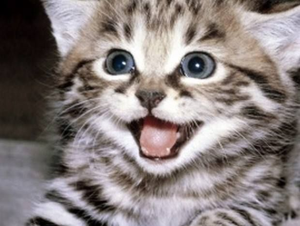 Did You Know... Dogs have 42 teeth, cats have 30 teeth