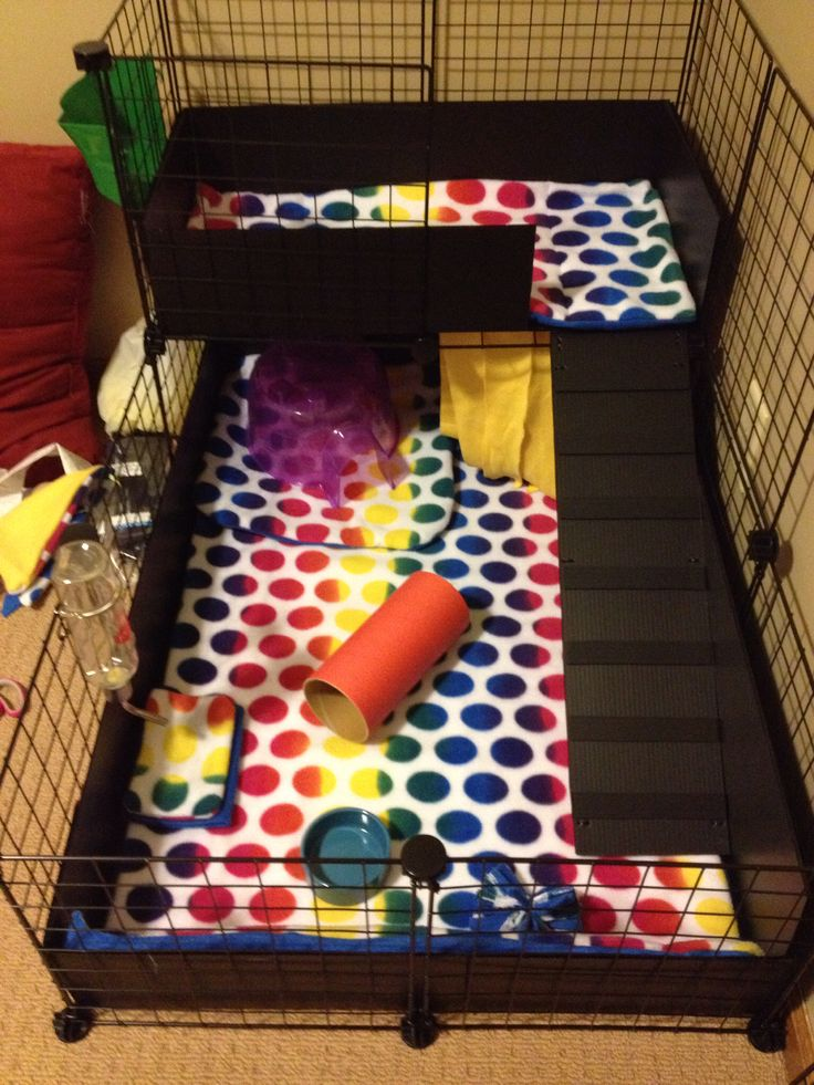 C & C cage for guinea pigs with fleece liner. Cute!