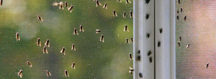 #тест #тест2 Избавляемся от мух в квартире: профилактика и народные методы http://happymodern.ru/izbavlyaemsya_ot_mukh_v_kvartire_profilaktika_i_narodnye_metody/ Как избавиться от мух в доме. Барьерные средства против взрослых мух летом для частного дома просто обязательны, но следует проводить профилактику их размножения внутри дома