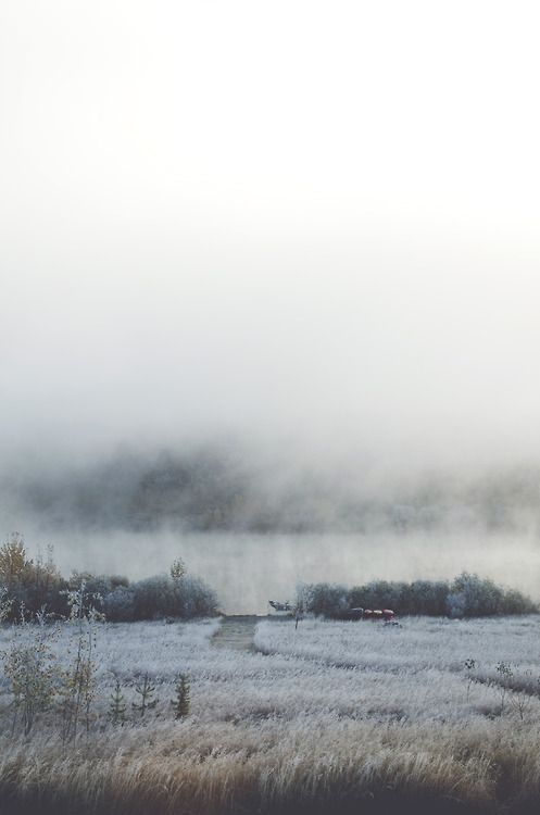 thephotographyqueen:    woke up to a frosty yard and a foggy lake