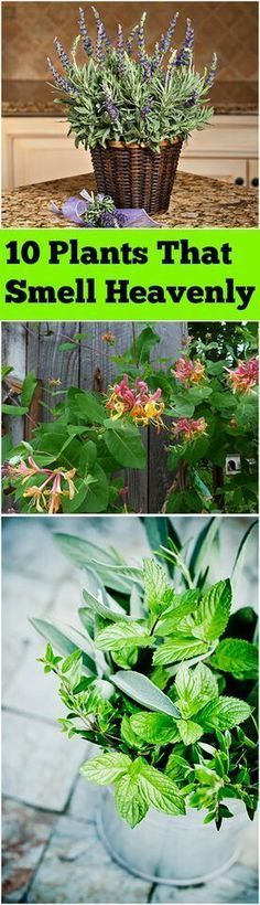 10 Heavenly Smelling Plants for Your Yard and Garden #gardeningcontainer