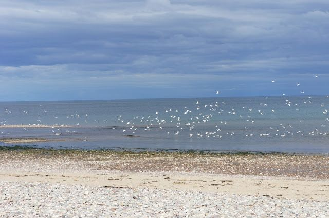 Birds take flight at Stonehaven Beach, Aberdeenshire, Scotland.