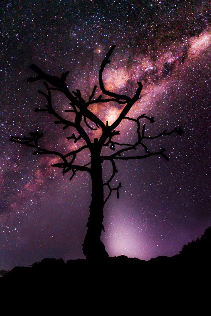 La vida es una flor de noche, un destello, una estrella fugaz, un parpadeo de ojos o un simple chasquido.