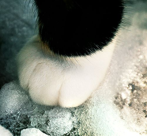 142 Best Images About Cat Paws On Pinterest
