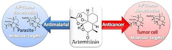 Natürlich Gesund: Krebs und Artemisia annua