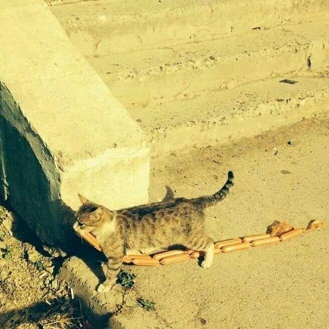 #лепра #коты