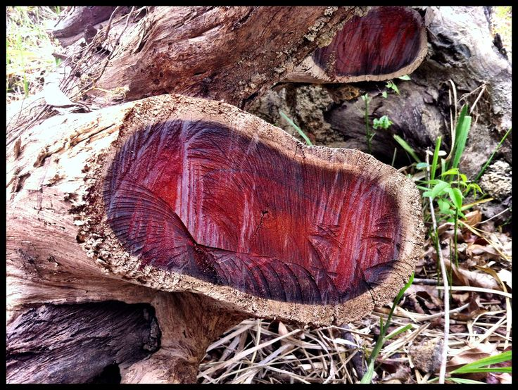 Cocobolo wood, deep reds and amazing grain