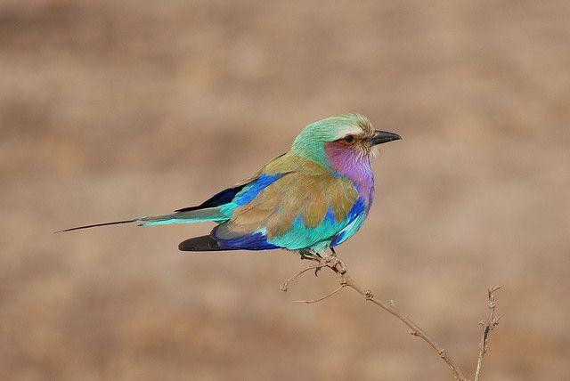 ANIMALES EN SUDAFRICA