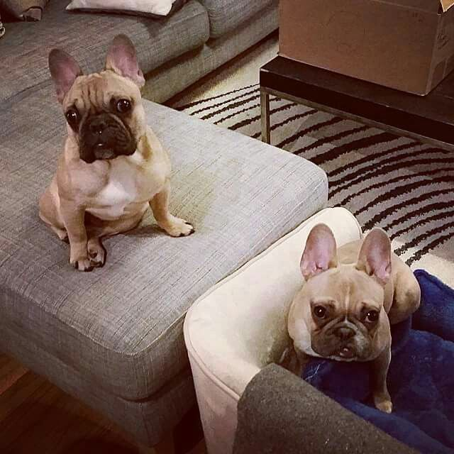 Liam and Filip❤❤❤❤❤, French Bulldogs