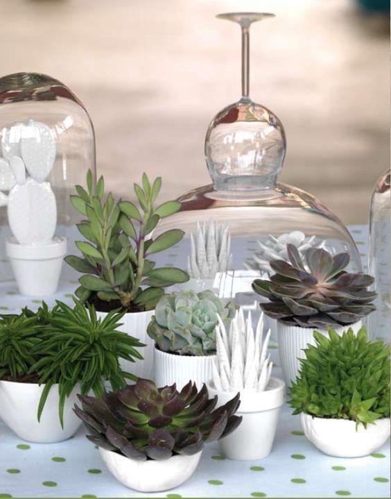 Si vous possédez de petits espaces, je vous propose de choisir des mini-plantes !