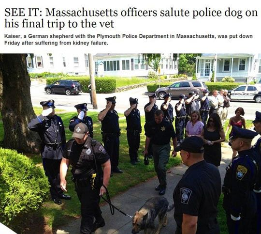 Officers saluting police dog.  Once again, it's good to know there are still good people out there.