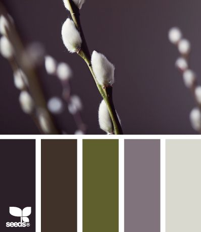 catkin color {Oh I love this! Oh so much. Yep... this is going to be the bedroom color scheme. I have dark brown walls and a lot of purple bedding... now to throw in some gray and green.}