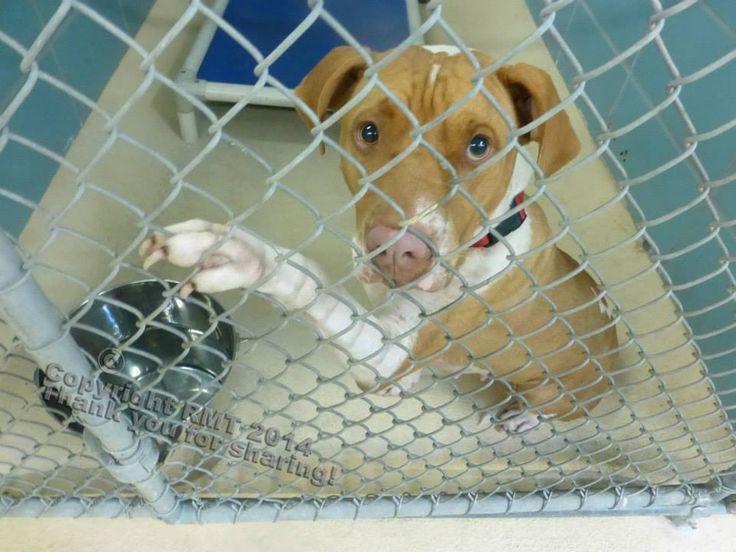 17+ Inyo county animal shelter ideas