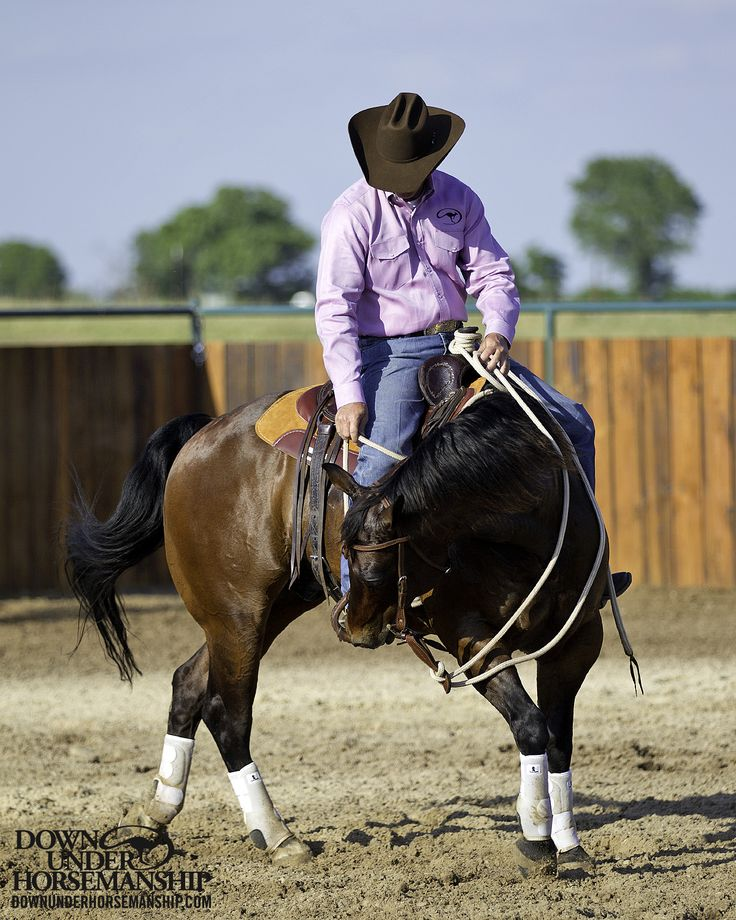 horse training and showing Rki horse training rates all rates are on a per month basis rates for horse showing and horse sales too rki is available for riding and training clinics.