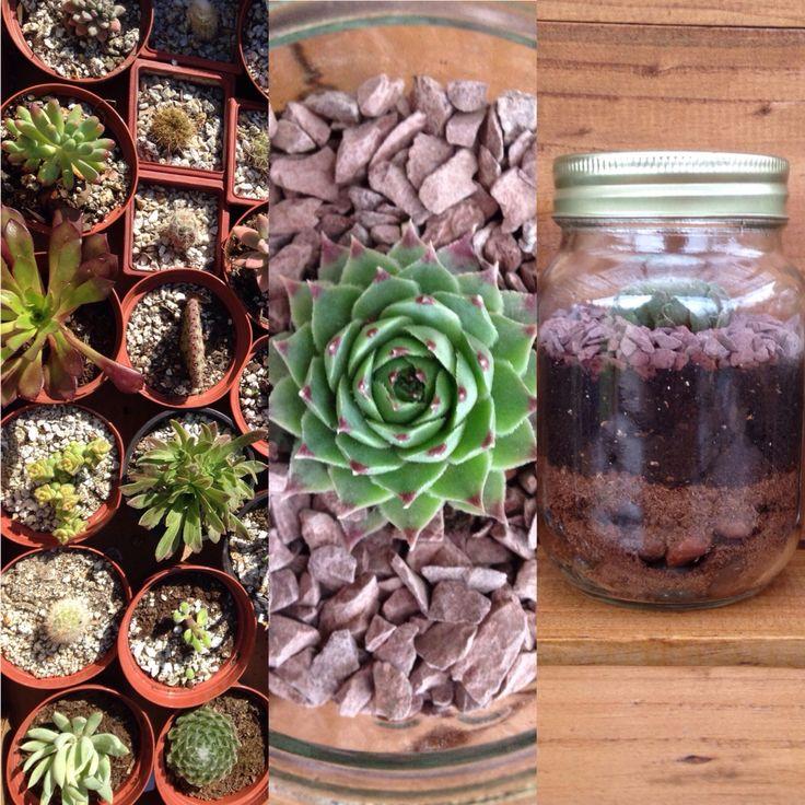 Terrarios  con suculentas y cactus