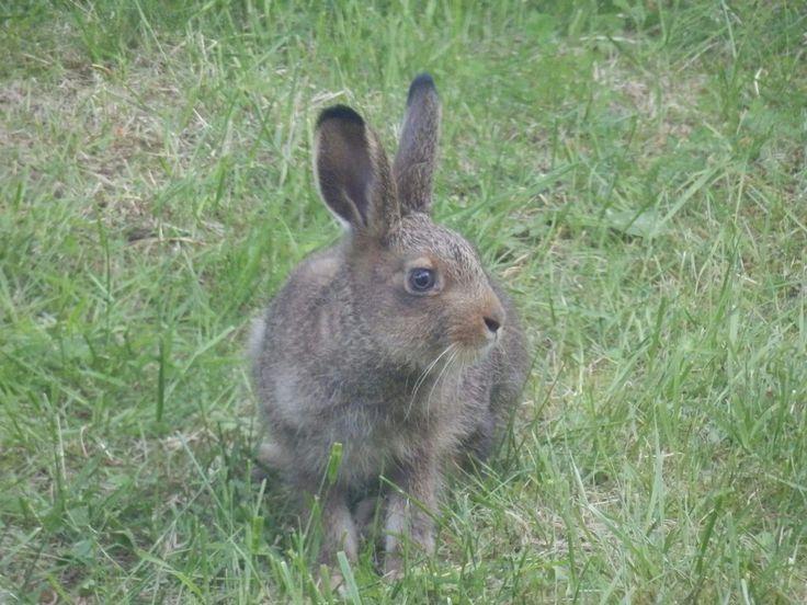 Rabbit is runner.