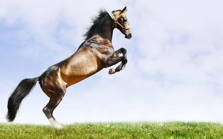 gif horse images | Home - Wallpapers / Photographs - Animals - Brown horse