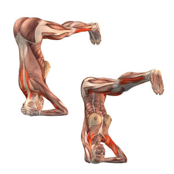 Supported headstand, legs parallel to floor - Urdhva Sirsasana - Yoga Poses | YOGA.com