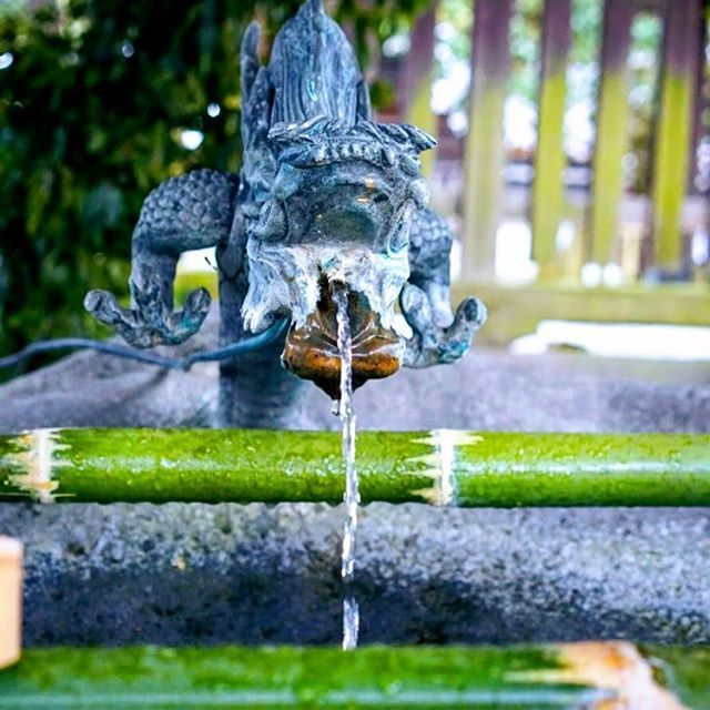 Torii gates and dragon fountains - my favorit attractions from Japan 🇯🇵🐲⛩ // Torii kapuk és sárkányos szökőkutak - kedvenceim Japánból 🇯🇵🐲⛩ #szegedbudokan #martialarts #academy #szeged #budokan #japan #japanese #water #fountain #kyoto #dragon #holy #spirit #blessed #samurai #culture #travel #trip #budo #memory #tbt #shinto #shrine #garden #zen #mediation #ryu #blessing #misogi #spiritual