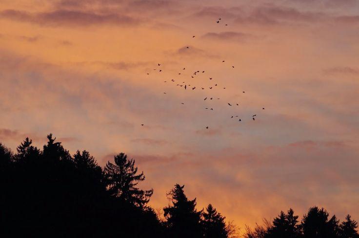 Cuervos del viento