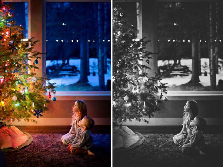 O Christmas Tree... — Dana Pugh Photography