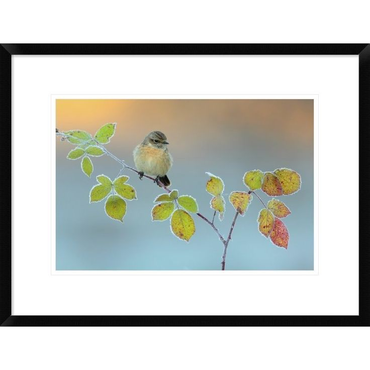 Global Gallery, Andres Miguel Dominguez 'Winter Colors' Framed Giclee Print