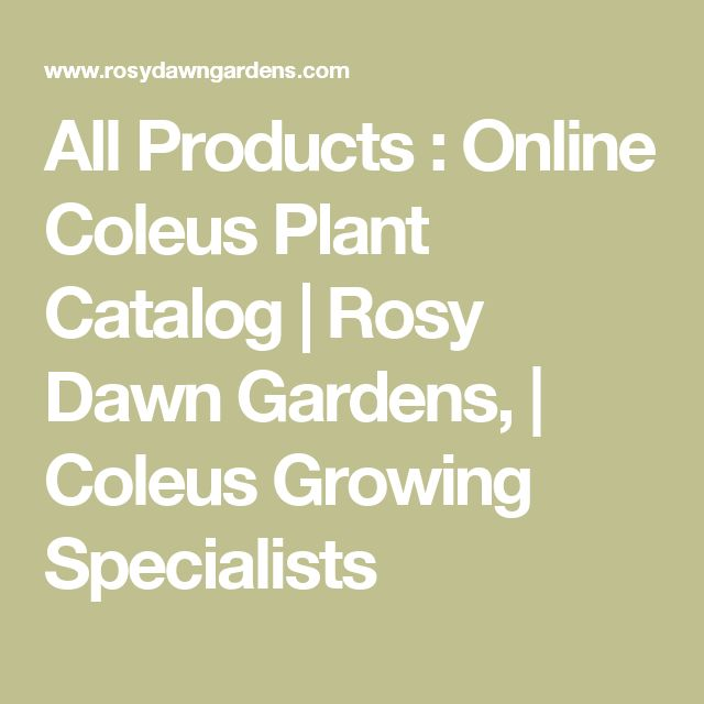 All Products : Online Coleus Plant Catalog | Rosy Dawn Gardens, | Coleus Growing Specialists