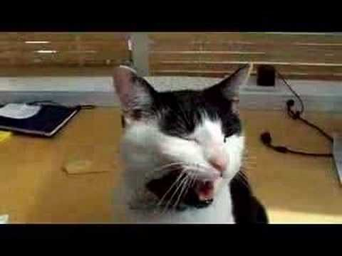 This is a great video clip to send to friends on their birthdays. This tuxedo cat helps his owner sing Happy Birthday!