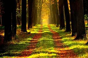 WWF propone medidas concretas en el Congreso Forestal Mundial para combatir la deforestación