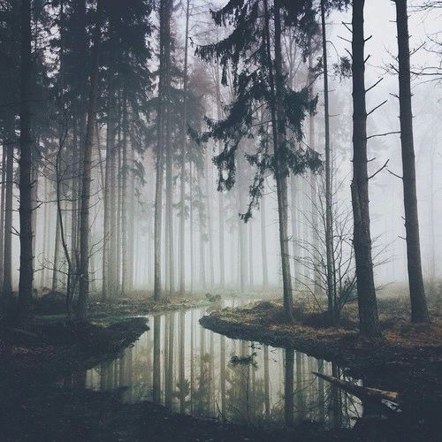 forest, nature, and dark kép