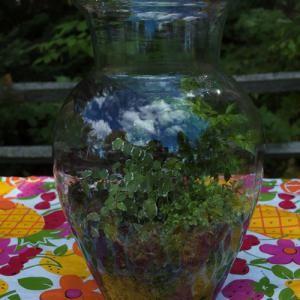 10 Great Easy to Grow Plants that Thrive in Terrariums.: Choosing Terrarium Plants