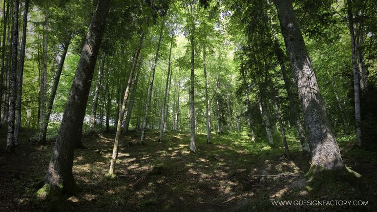 Spring Forest by Virginio Perissinotto on 500px