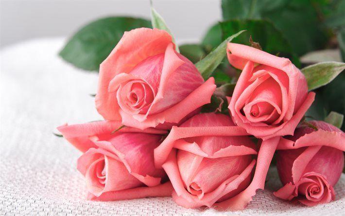 Scarica sfondi rose rosa, bouquet di rose, rose, boccioli di rosa