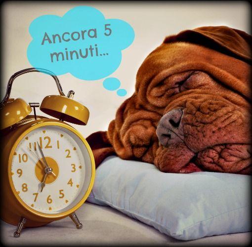 'Ancora 5 minuti...': un classico della mattina! Anche per questo cagnone, un Dogue de Bordeaux!