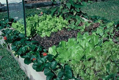 Raised bed ideas: Gardens Beds, Raised Beds, Cheap Ideas, Beds Gardens, Cinder Blocks, Beds Soil, Raised Garden Beds, Beds Ideas
