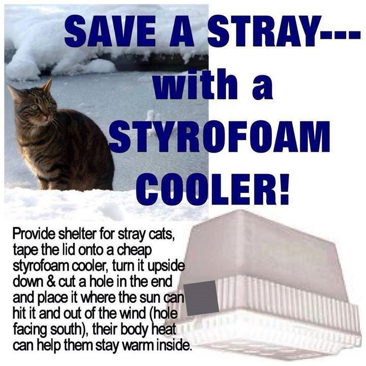 Cheap shelter for feral cats  It would probably be good to weigh it down  somehow68 best DIY   Feral Cat Shelters   Feeding Stations images on  . Outdoor Cat House Winter Warmer. Home Design Ideas