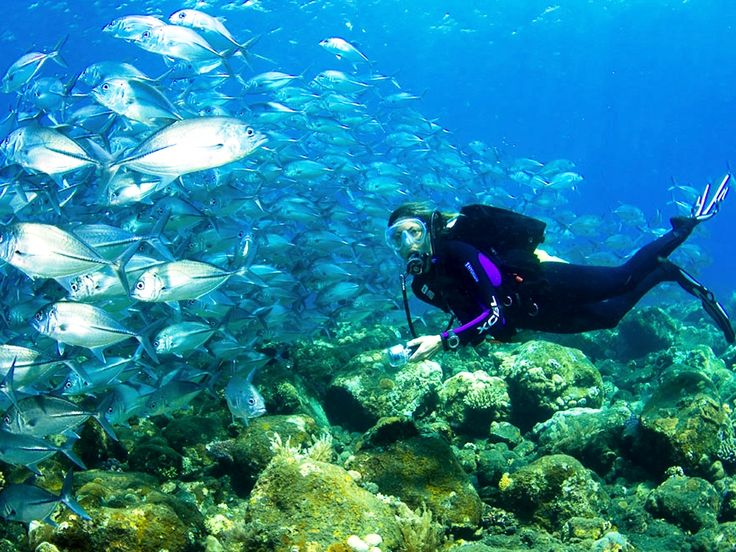 diving #under the sea #bali  www.geriabalivacation.com