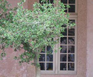 les 25 meilleures id 233 es concernant olivier en pot sur pots 224 billes cour rustique
