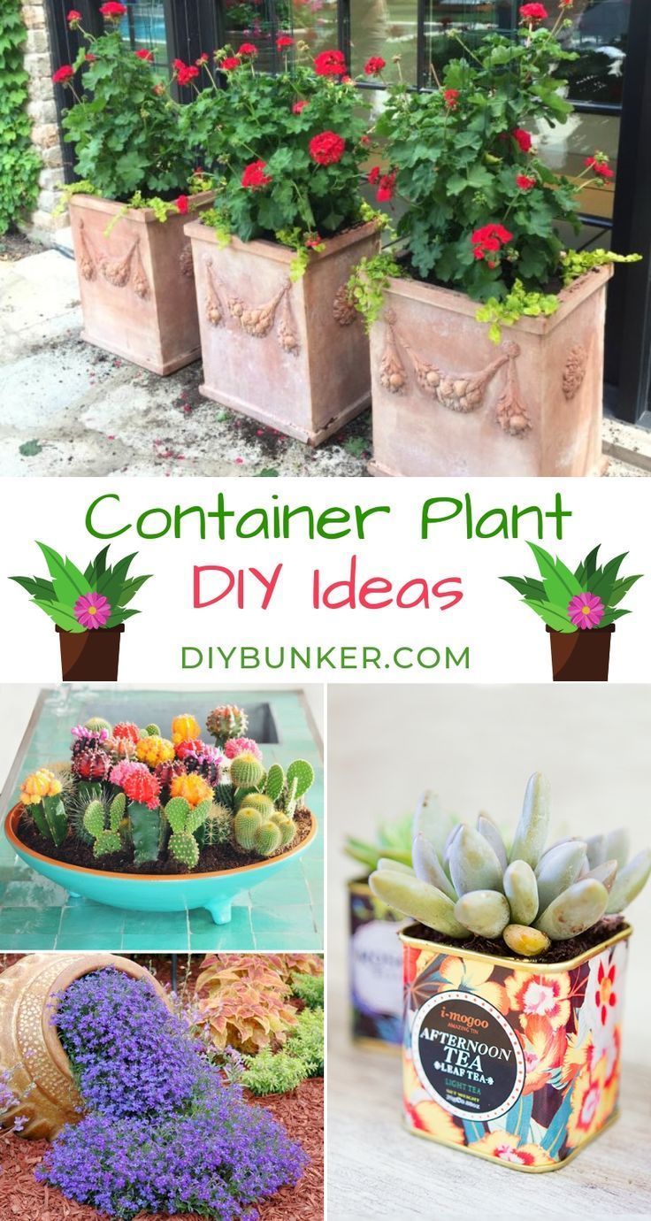 Diys Travel Natural Remedies And Recipes Container Gardening