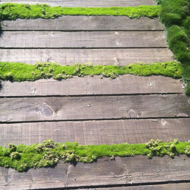 Wood and moss---may have to do this for the walk way I've been trying to come up with in the front yard...cheep and easy for now.