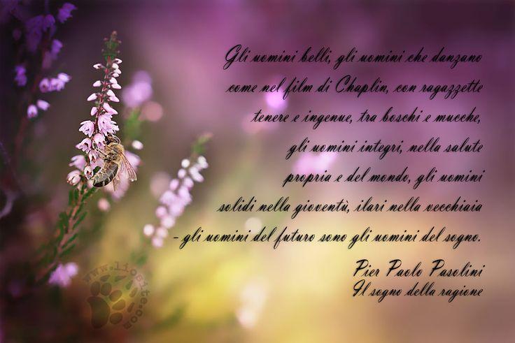 """Un breve passagio dalla raccolta """"Poesia in forma di rosa"""" della poesia """"Il sogno della ragione""""  """"Gli uomini belli, gli uomini che danzano come nel film di Chaplin, con ragazzette tenere e ingenue, tra boschi e mucche, gli uomini integri, nella salute propria e del mondo, gli uomini solidi nella gioventù, ilari nella vecchiaia - gli uomini del futuro sono gli uomini del sogno. """" Pier Paolo Pasolini - Il sogno della ragione #pppasolini, #pierpaolopasolini, #futuro, #sogno…"""