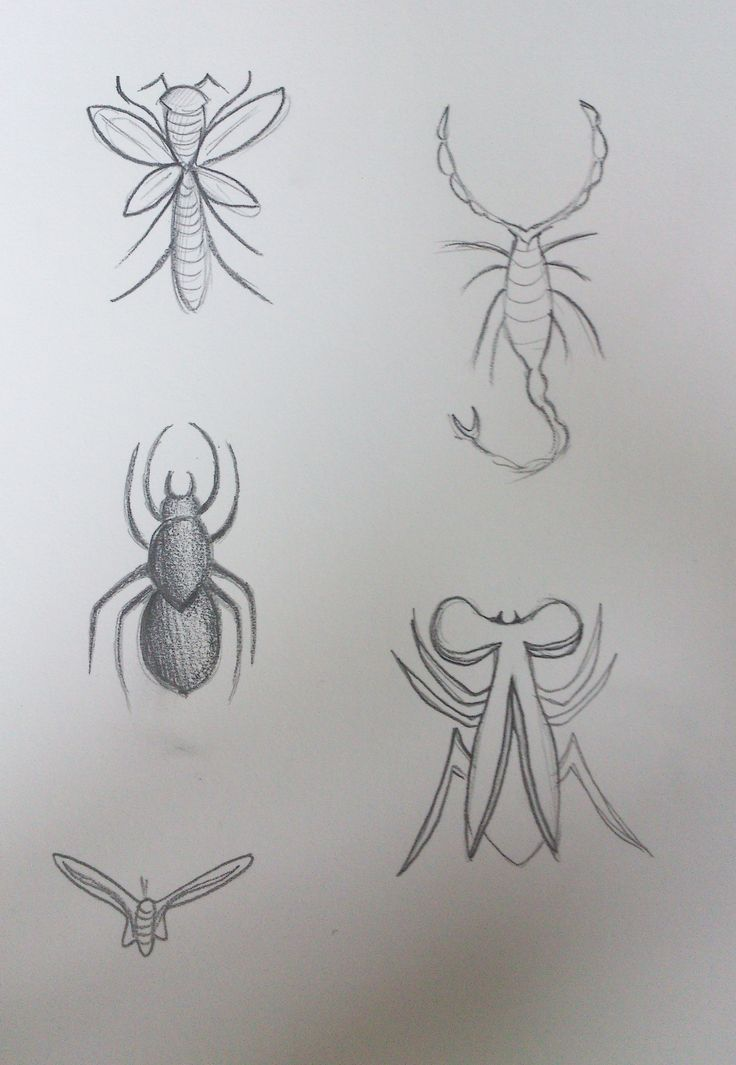 Insect designs 2