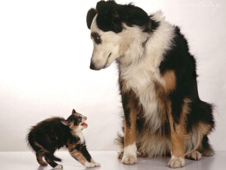 Śmieszne, Kot i Pies