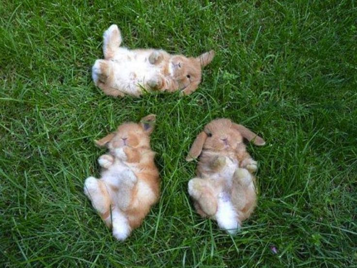 3 Bunnies watching the clouds.