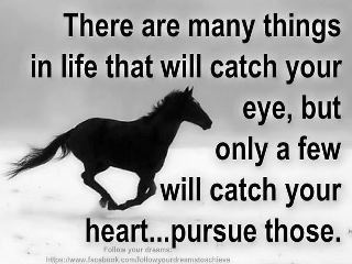 <3Hors Quotessayings, Healing Heart, Heart Eye, Equestrian Quotes, Hors Definition, Hors Healing, Favorite Quotes, Off Off, Horsey Quotes