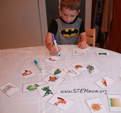 STEM Mom's Food Chain Activity Cards