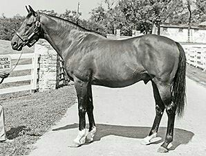 23 Best Ribot Images On Pinterest Horses Horse And