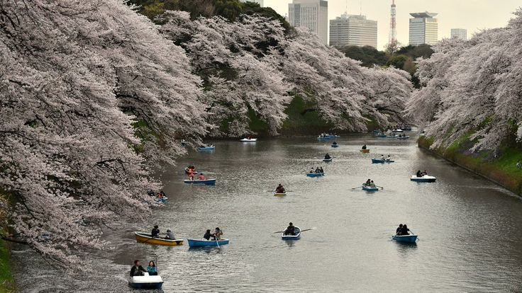 Gorgeous Photos Show Off The Beauty Of Japan's Cherry Blossom Season